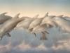 Aqiadamas Dolphin Mural - Muralist Carolee Merrill