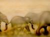 Elephant Walk Murall- Muralist Carolee Merrill