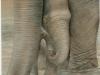 Baby Elephant Mural  Muralist Carolee Merrill